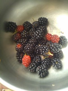 120730_0946 BlackBerry.jpg